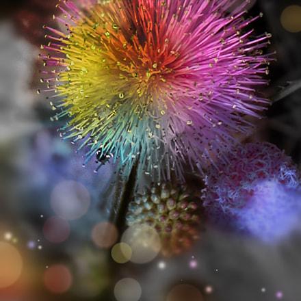 Flurry flower, Nikon E5700