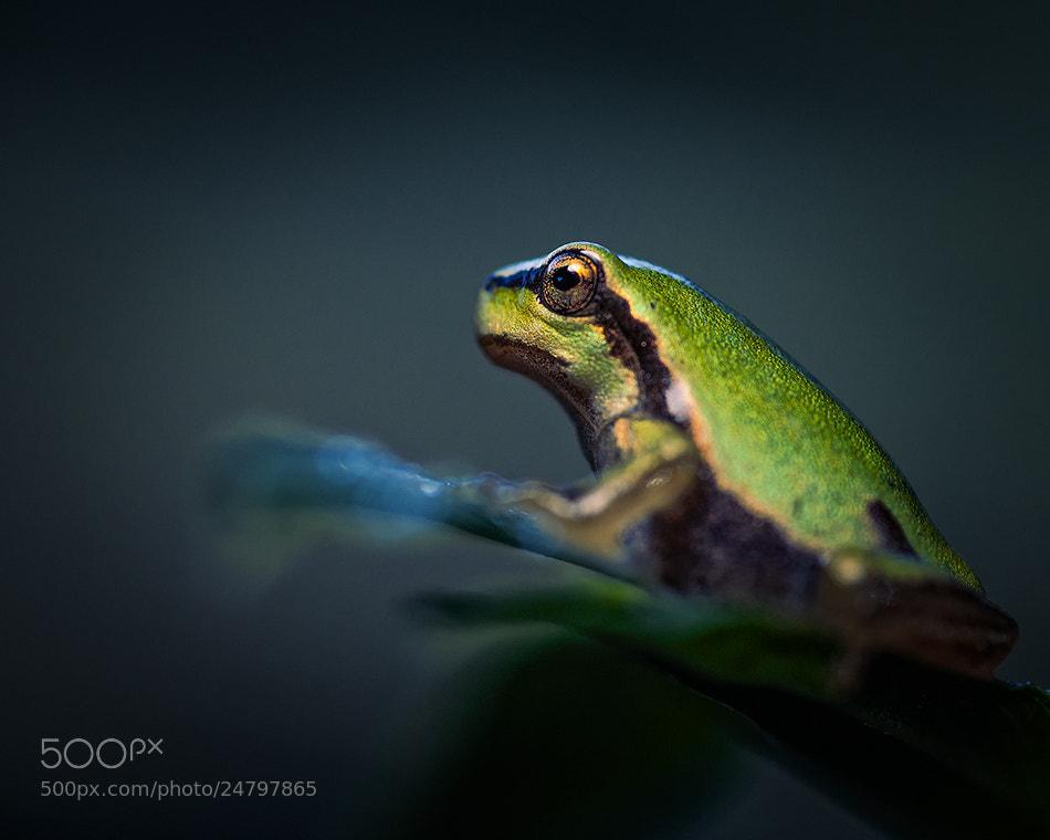 Photograph Hypnotic Eye by Alberto Di Donato on 500px
