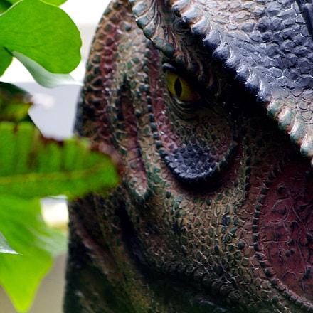 National Botanical Garden, Washington, Pentax K-7, smc PENTAX-DA 50-200mm F4-5.6 ED WR
