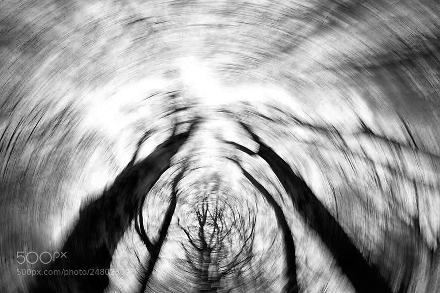 Photograph Black trees by Philippe Lebeaux on 500px