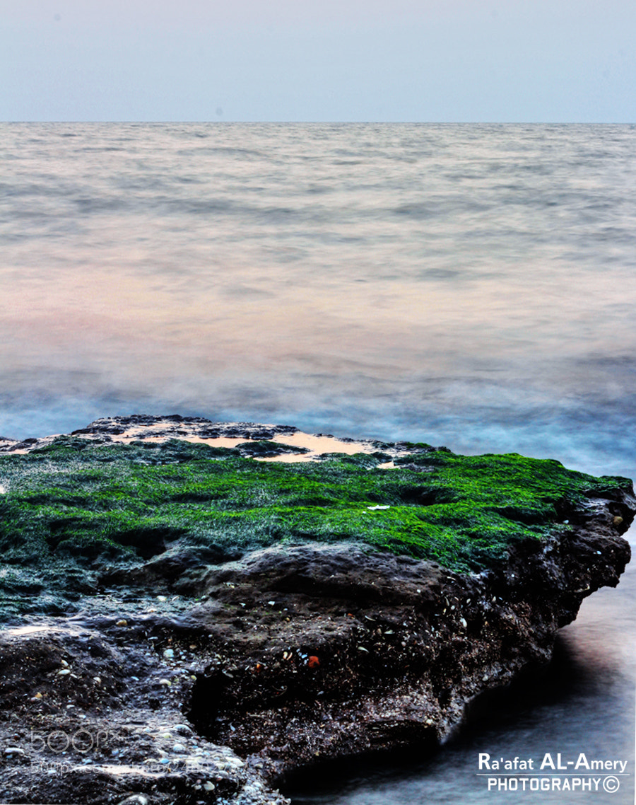 Photograph Algae by Ra'afat Al-Amery on 500px