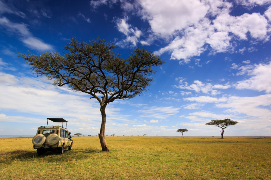 Tanzania - Serengeti - Safari Landscape by Donna Carter on 500px.com