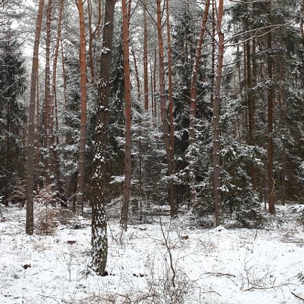 The Coniferous Wood, Canon EOS 5D MARK II, Canon EF 35mm f/2