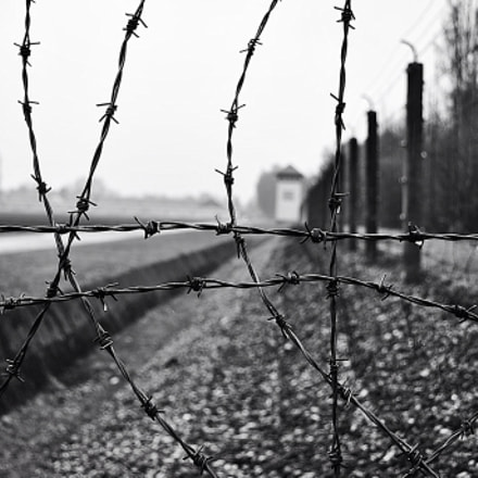 Sadness behind the wire