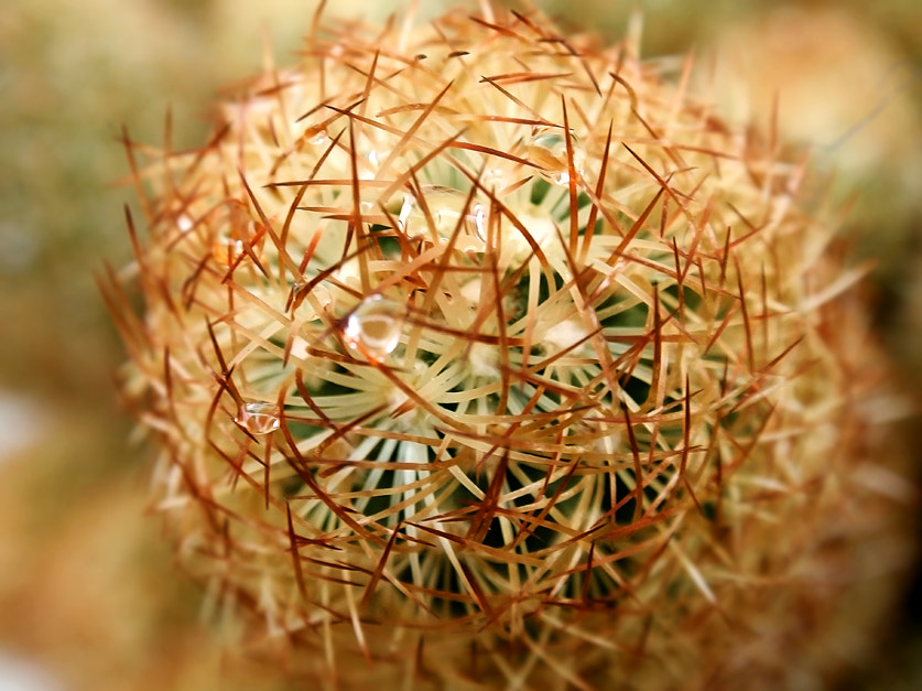 Photograph Cactus by Ana MD on 500px