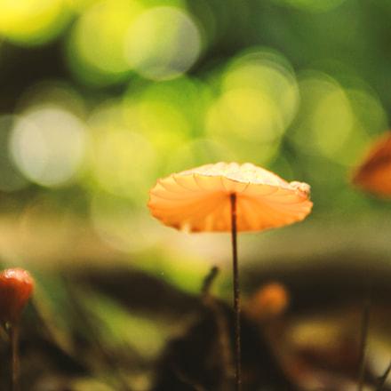 Umbrella in the rain forest.