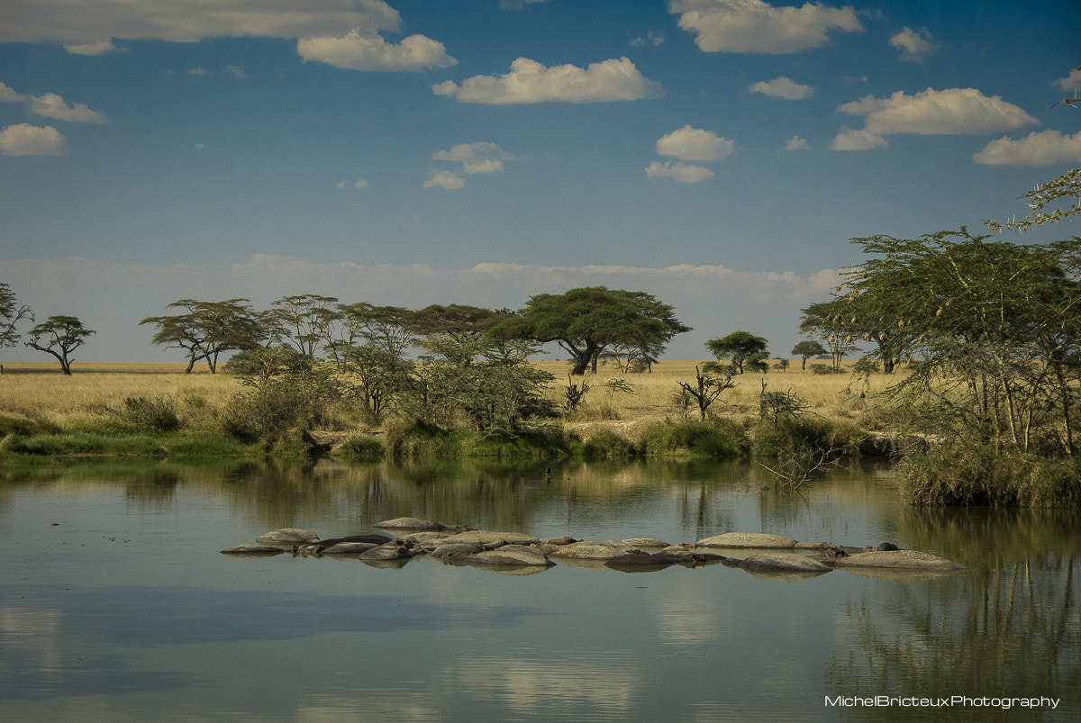 Photograph Hippo Pool, Serengeti by Michel Bricteux on 500px