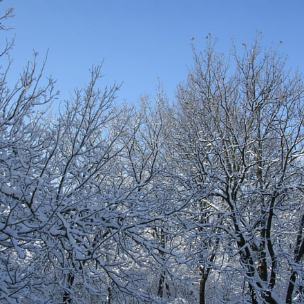 Snow, Nikon E3100
