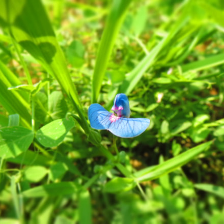 The Blue Flower ., Canon IXUS 510 HS