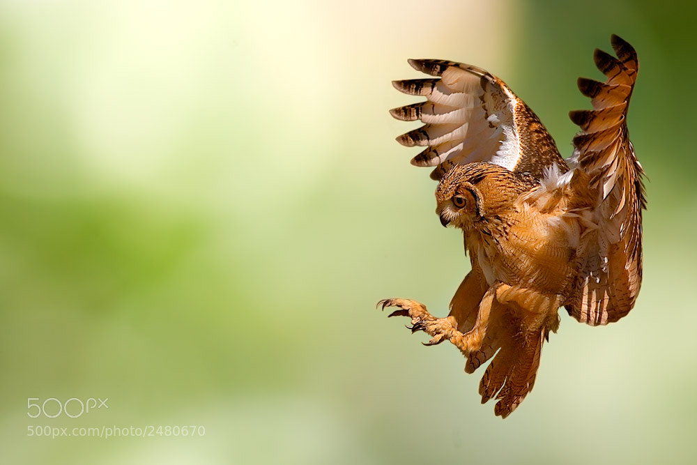 Photograph Flying by Stefano Ronchi on 500px