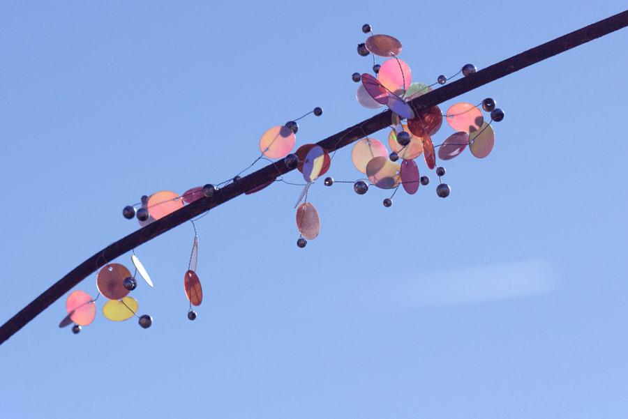 Les paillettes (sequins) de Christine Druesne sur 500px.com