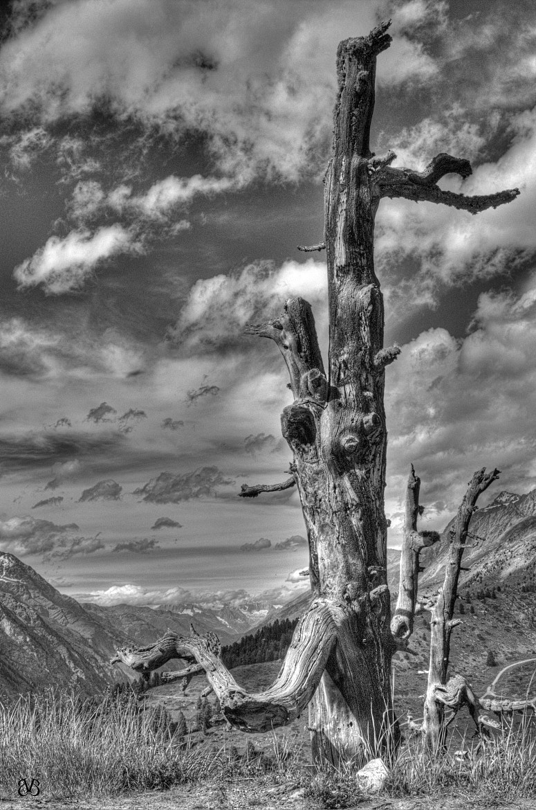 Photograph Dead Tree with a View by Birgit Bolata on 500px