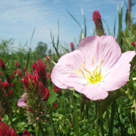 In Bloom, Fujifilm FinePix S8200