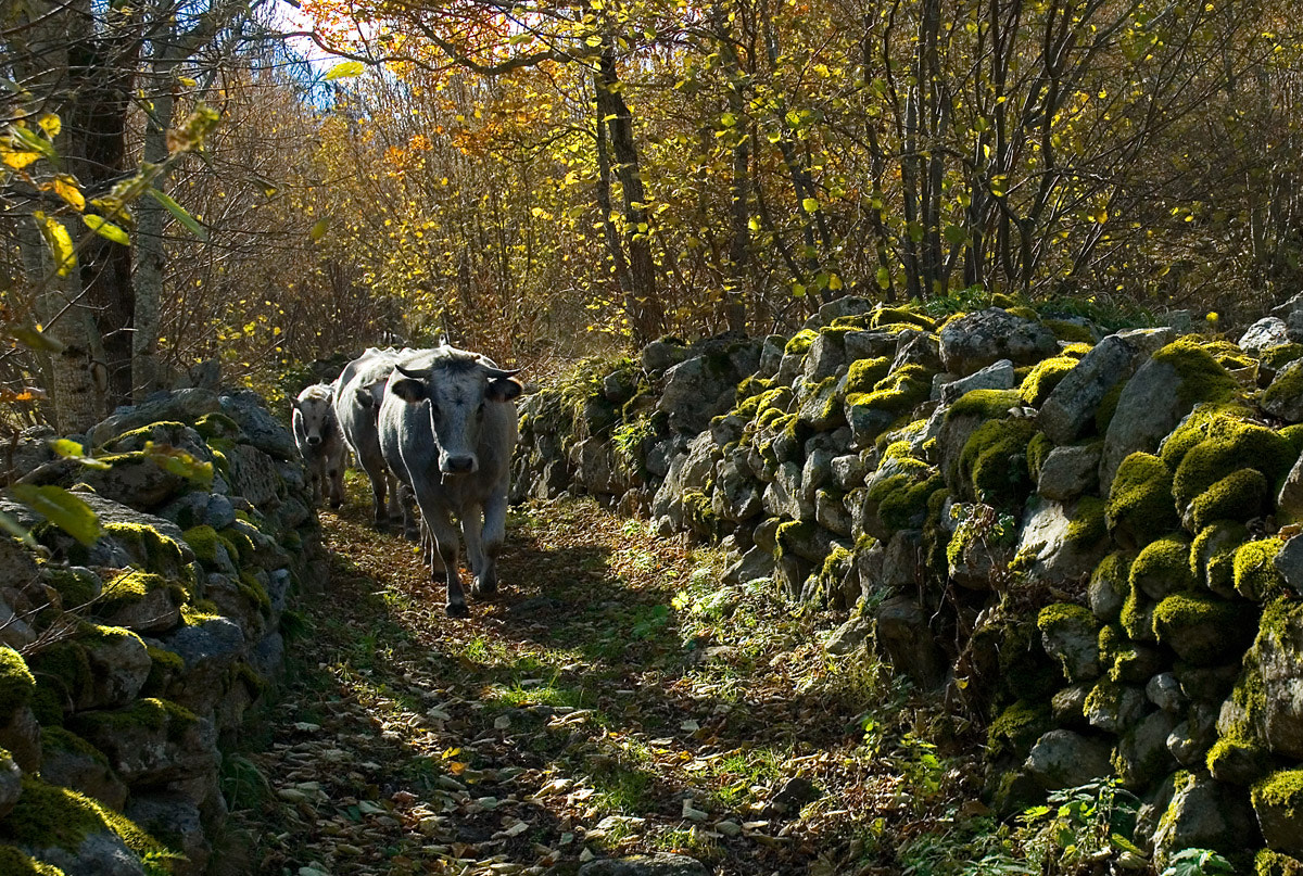 Photograph transhumance by paco lala on 500px