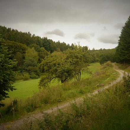 way in Balver Wald, Panasonic DMC-LS80