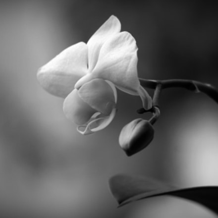 orchidee, Canon EOS 40D