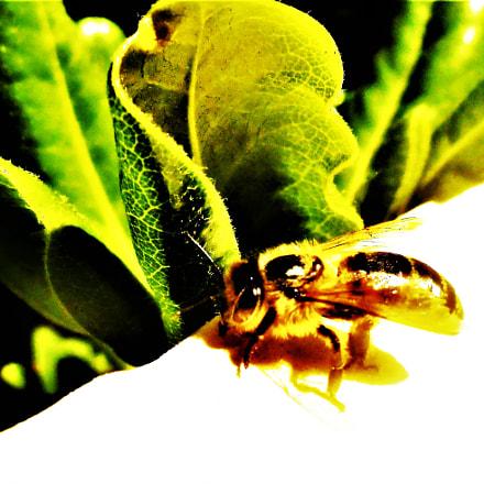 floral, Nikon COOLPIX S2700