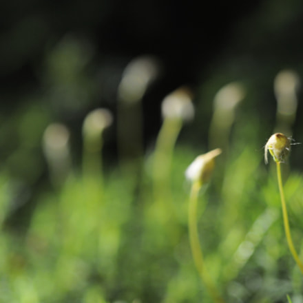 Nature, Nikon D90