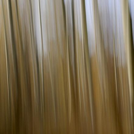 Nature, Nikon D90, Sigma 18-50mm F2.8 EX DC Macro