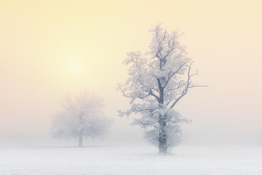Goldener Nebel by Andreas Bobanac on 500px.com