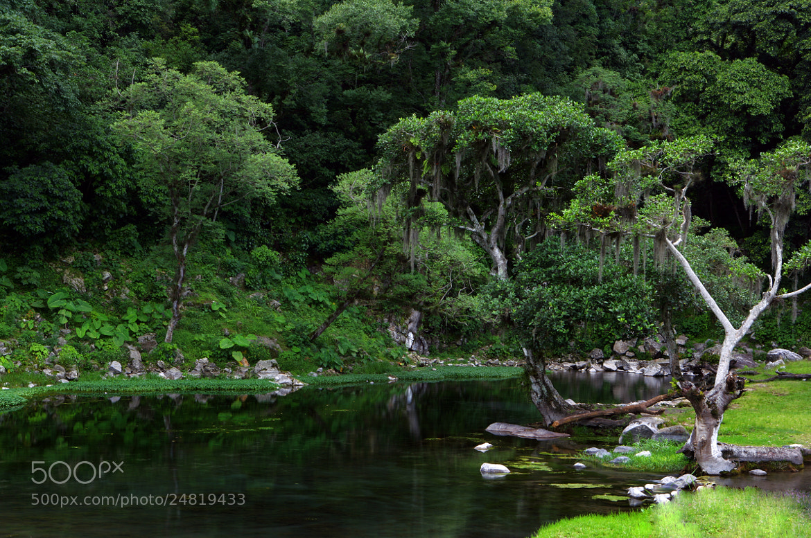 Photograph Lagoon and forest by Cristobal Garciaferro Rubio on 500px