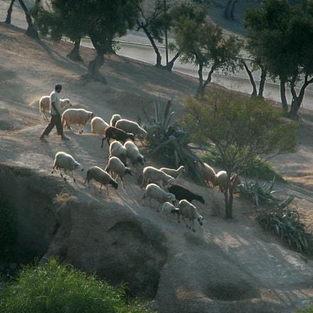 Shepherd Morocco, Nikon E5700