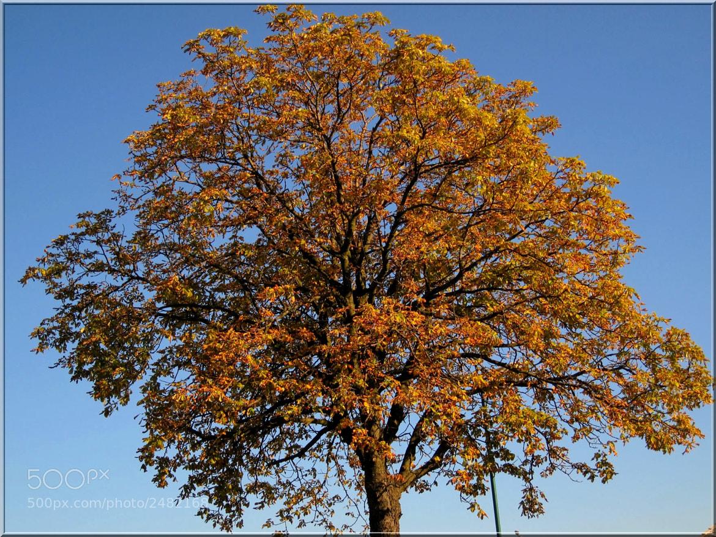 Photograph Golden Autumn 2 by ÁngelDeGuardia * on 500px