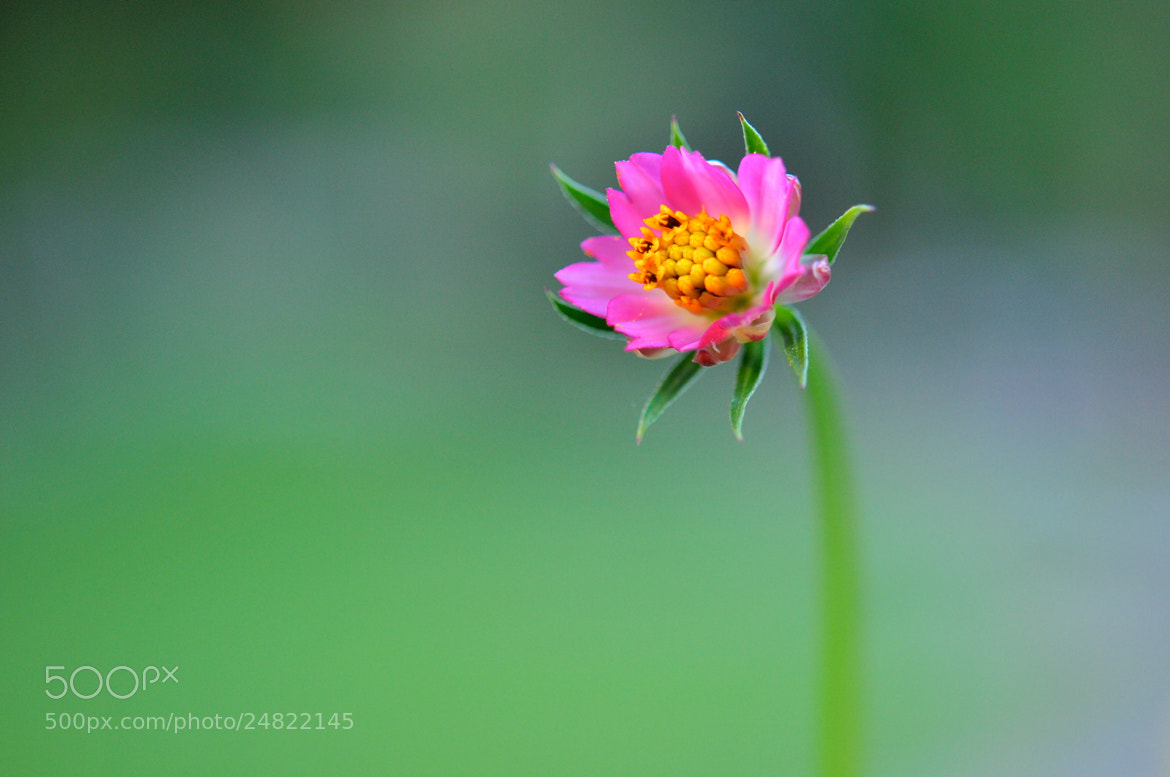 Photograph Bloom by Heshan  de Mel on 500px