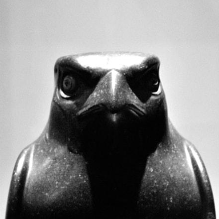 Angry Bird, Nikon D3100, Sigma 18-200mm F3.5-6.3 II DC OS HSM