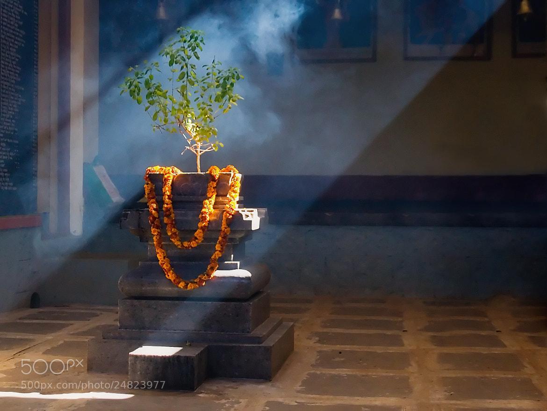 Photograph Tulisi | Light by Akshathkumar Shetty on 500px