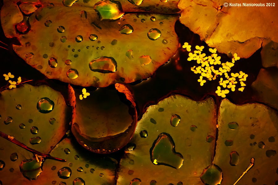 Photograph Seeking The Drops II by Kostas I. Nianiopoulos on 500px
