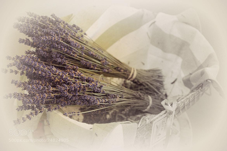 Photograph Lavender by Eva Lechner on 500px
