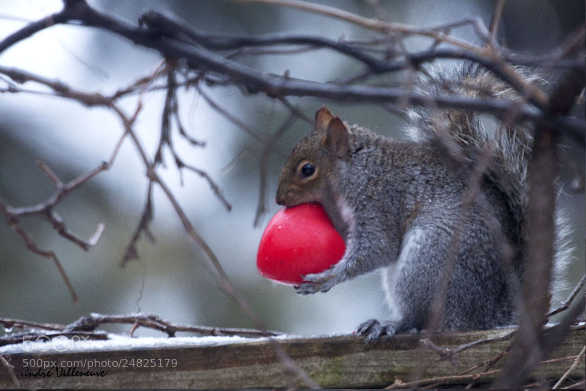 Photograph The heart on the hand by Andre Villeneuve on 500px