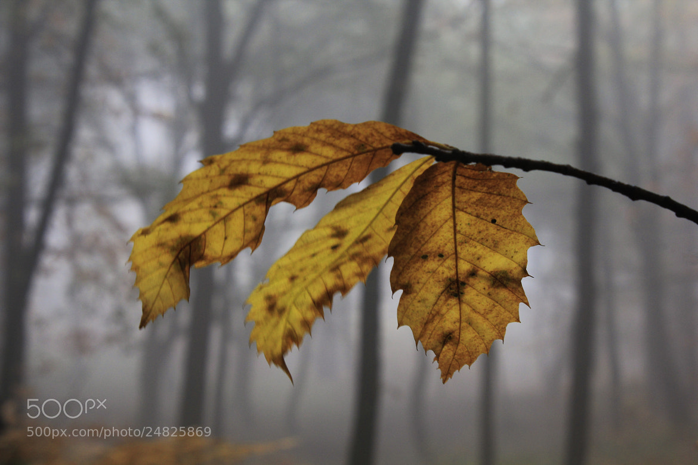 Photograph Autumn Memories... by Francesco Mangiaglia on 500px