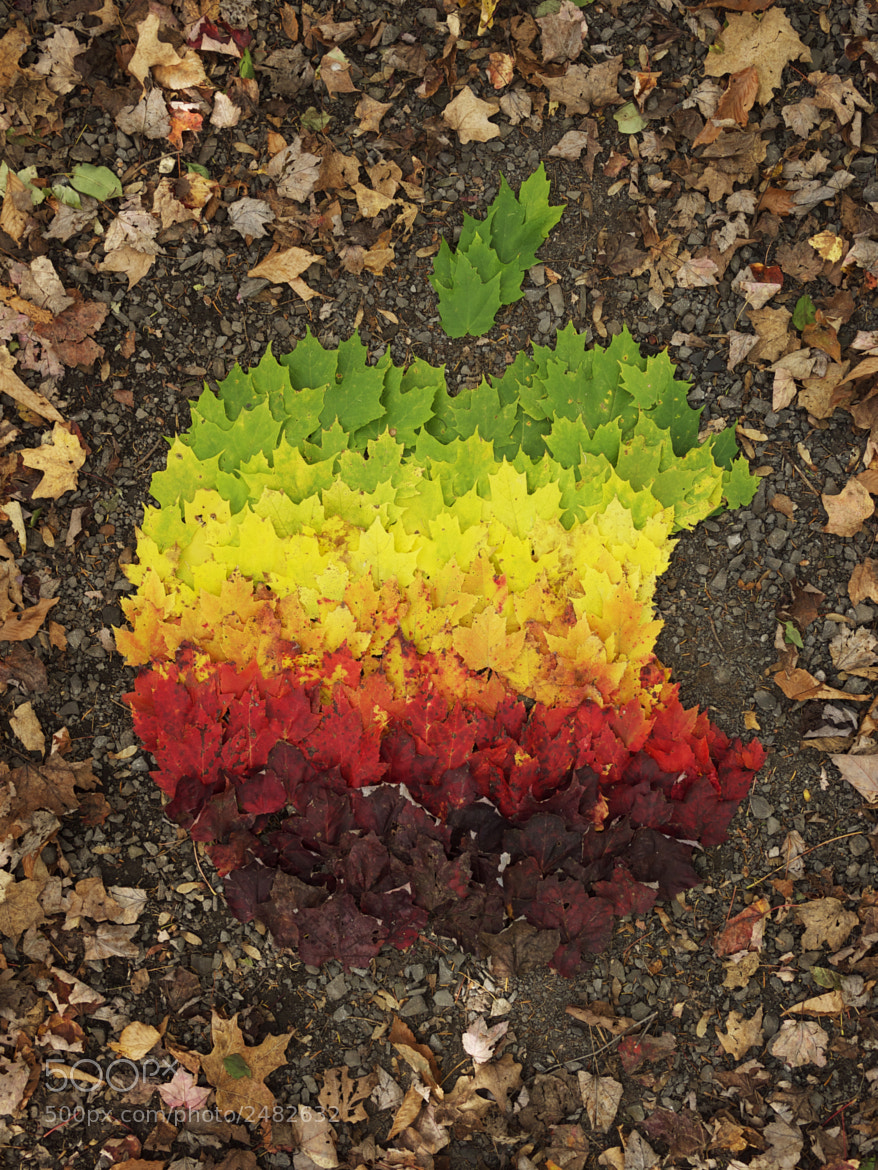 Photograph Apple Logo Autumn Spectrum by David Leclerc on 500px