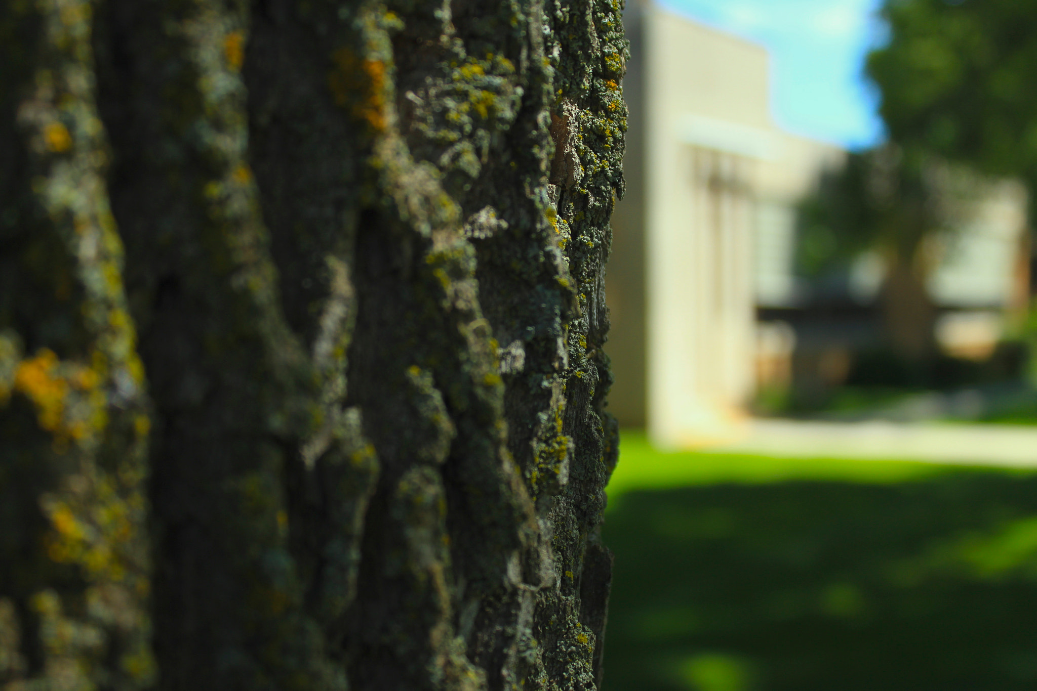Photograph Mossy Bark by Michael Steeber on 500px
