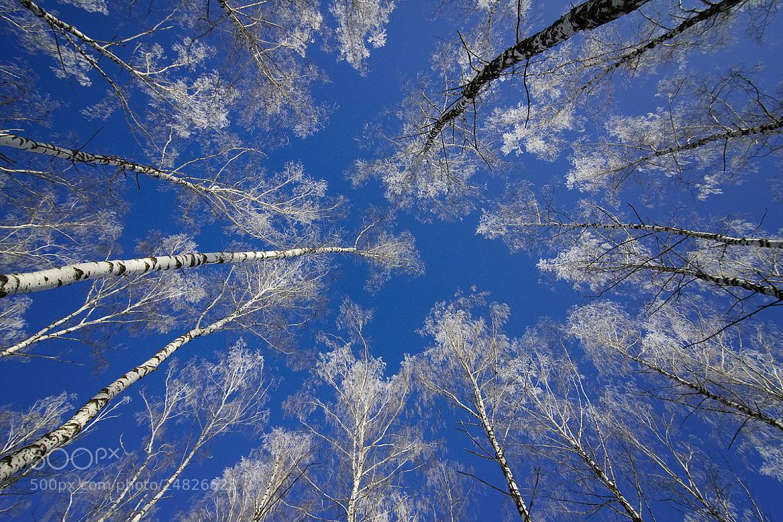 Photograph birch patterns by Dmitriy Golubev on 500px