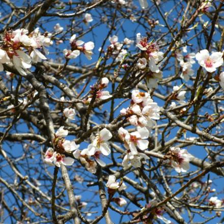 Spring is coming..., Panasonic DMC-FS16