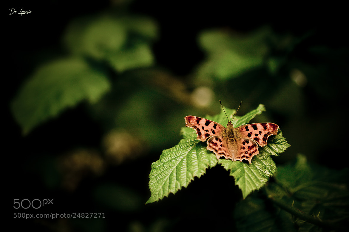 Photograph Butterfly by Damien De Assunção on 500px