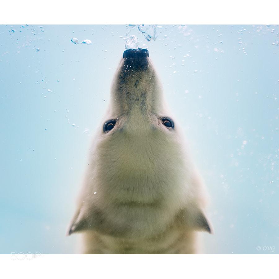 Photograph I'm watching you by Olga Gladysheva on 500px