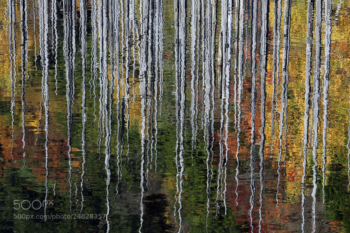 Photograph Reflection like Painting by yume . on 500px