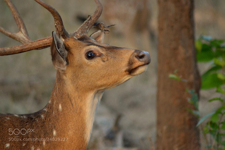 Photograph Elegance by Abhinandan Shukla on 500px