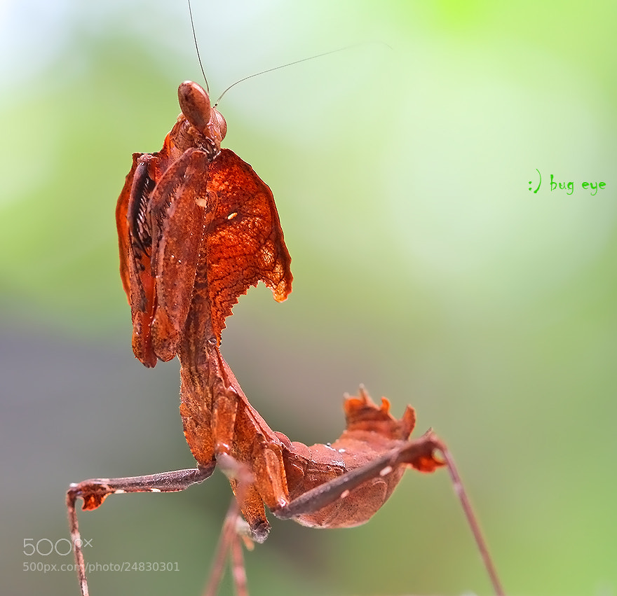 Photograph I c U  by bug eye :) on 500px