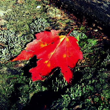 Autumn freshness, Canon POWERSHOT S80
