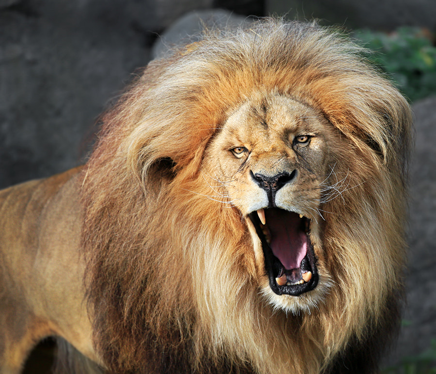 Photograph Grumpy by Klaus Wiese on 500px