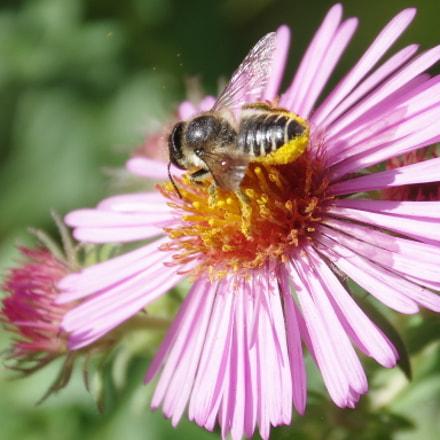 Pollen, RICOH PENTAX K-3 II