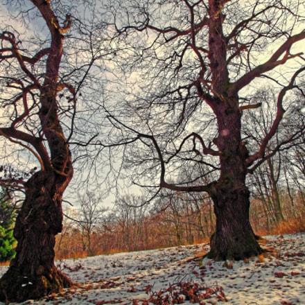Two old trees, Fujifilm FinePix S100FS