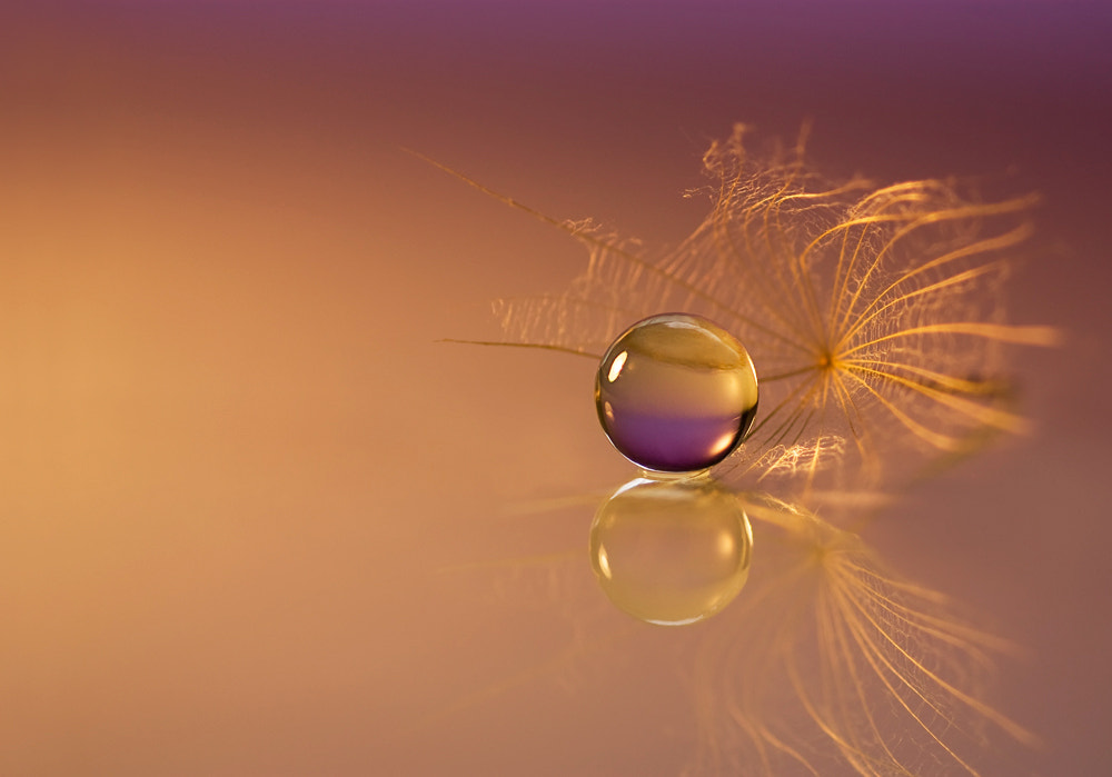 Photograph Purple and gold by Marcsi Kesjarne on 500px