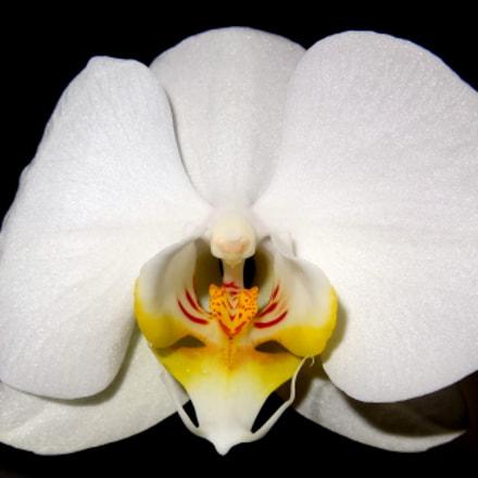 Orchid, Sony DSC-HX9V