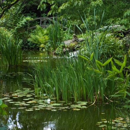 Pond at the Barn, Nikon COOLPIX S6200